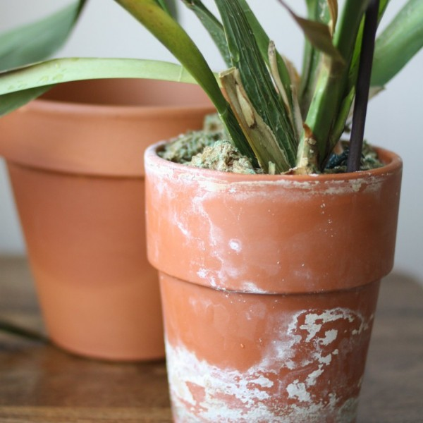 aged terracotta pot with orchid