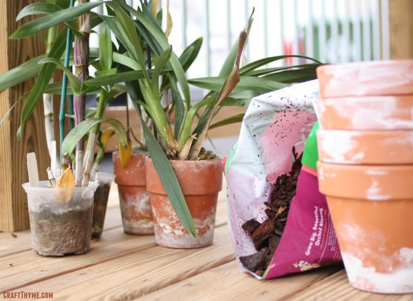 Items needed to repot an orchid in bark