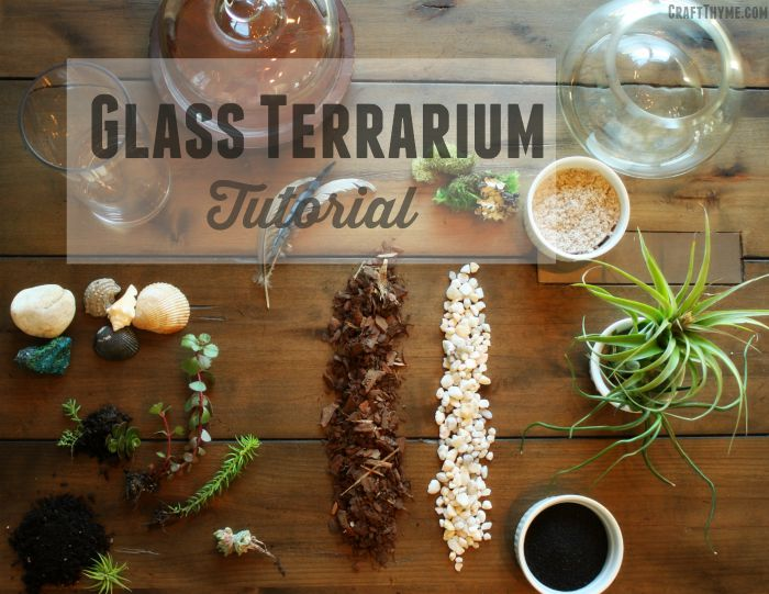 How to make a DIY Glass Terrarium