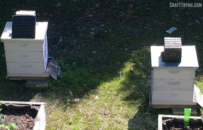 Bee hives in Chicago