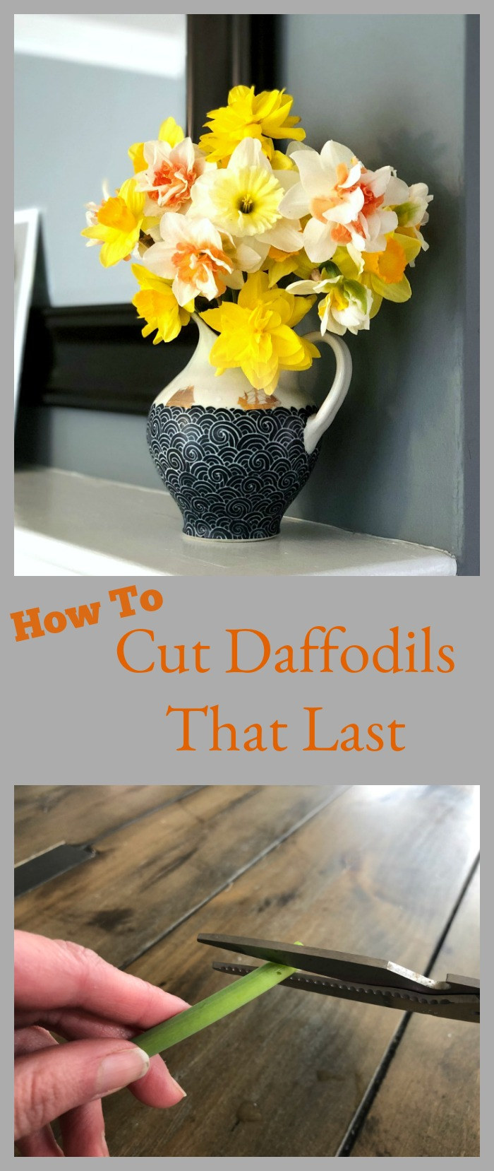 How to cut daffodils to make them last in a vase or flower arrangement
